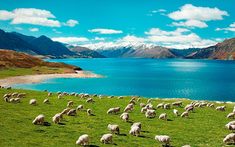 Novazelandia-foto-3